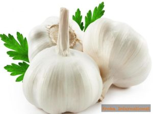 Image of Garlic in Agricultural Products