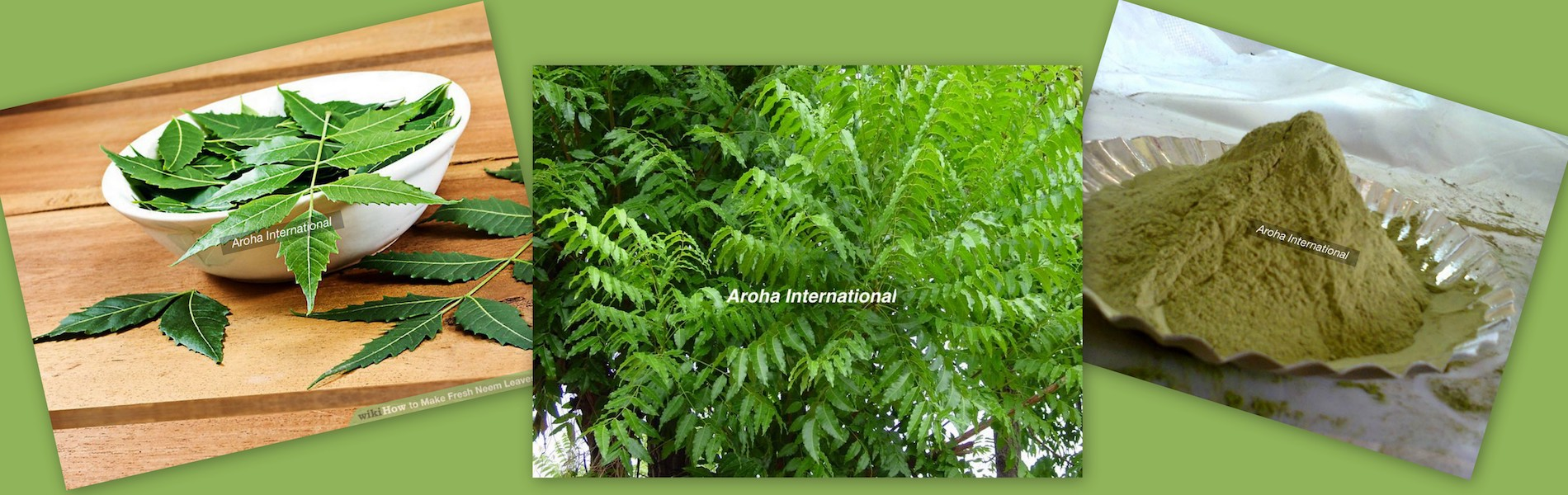 Image of Neem Featured